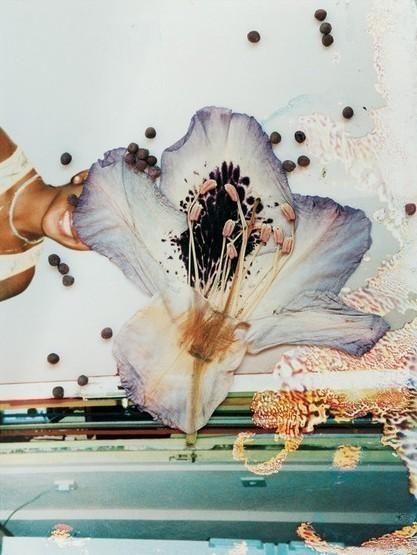 Фото-гербарий. Изображение № 15.