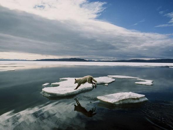 Лучшие снимки от National Geographic (золотой фонд). Изображение № 9.