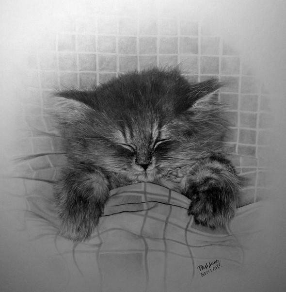 Paullung.и его коты. Изображение № 2.