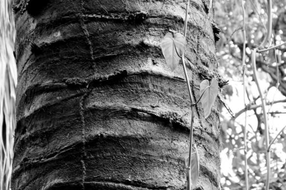Наблюдая за пальмой. Изображение № 2.