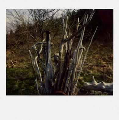 20 фотоальбомов со снимками «Полароид». Изображение №162.