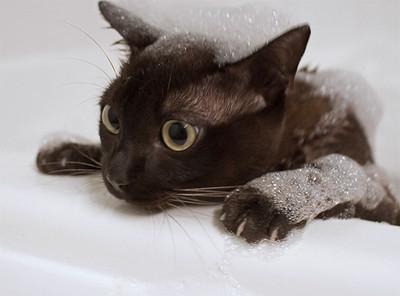 50 животных, которые ненавидят мыться. Изображение № 24.