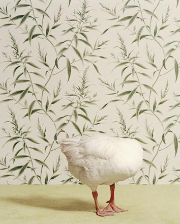 Животноводство отCatherine Ledner. Изображение № 8.
