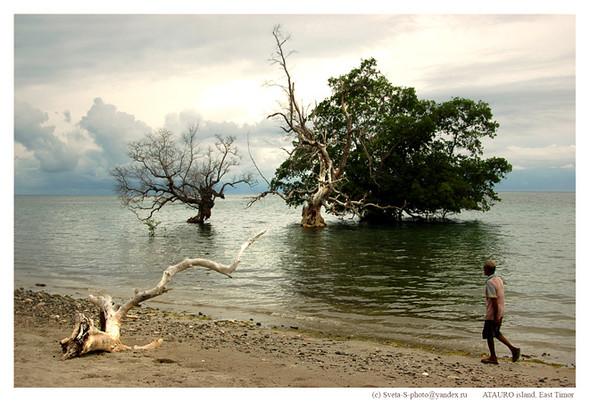 Восточный Тимор. Изображение № 19.