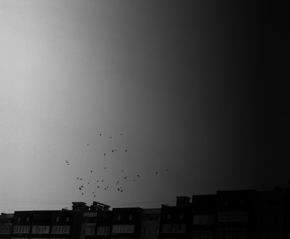 Чёрным по белому. Изображение № 4.