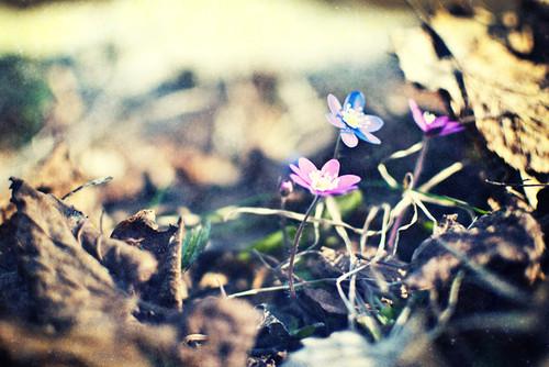 Изображение 1. Никогда не надо слушать, что говорят цветы. Надо просто смотреть на них и дышать их ароматом... Изображение № 1.