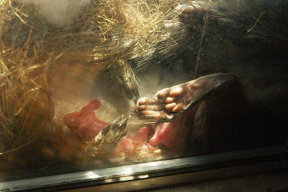 Белка в нашем окне. Изображение № 2.