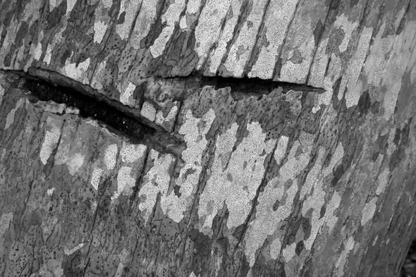Наблюдая за пальмой. Изображение № 7.