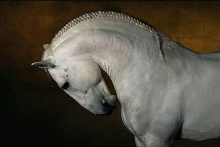 BARTABAS «Я быубрал всемашины изаменил ихлошадьми». Изображение № 3.