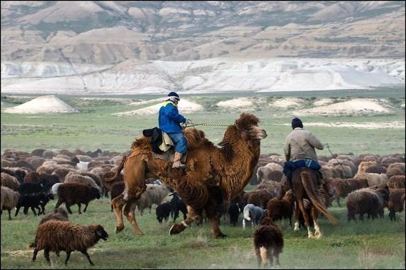 Западный Казахстан. Полуостров Мангышлак. Изображение № 12.