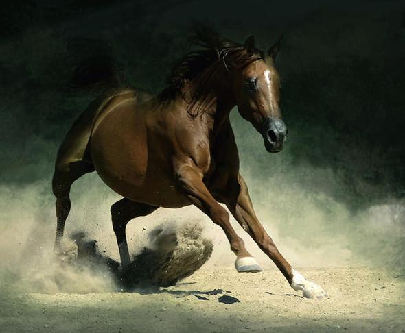 Фотографии лошадей Wojtek Kwiatkowski. Изображение № 8.