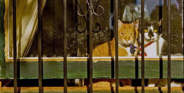 Cat. Window. Изображение № 48.