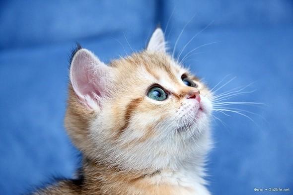 23 фото. Красивейшие кошки. Изображение № 2.