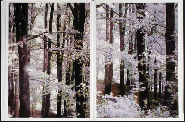 7 альбомов об абстрактной фотографии. Изображение № 84.