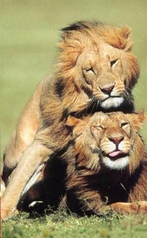 Сексуальный зоопарк. Изображение № 1.