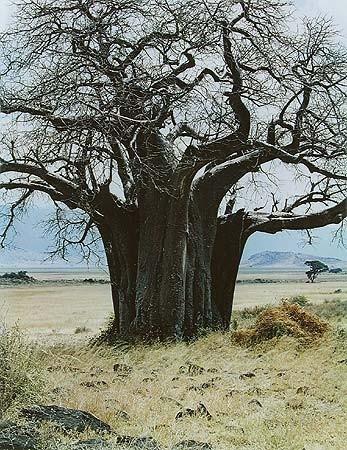 Элиот Портер: фотограф раскрасивший мир. Изображение № 10.