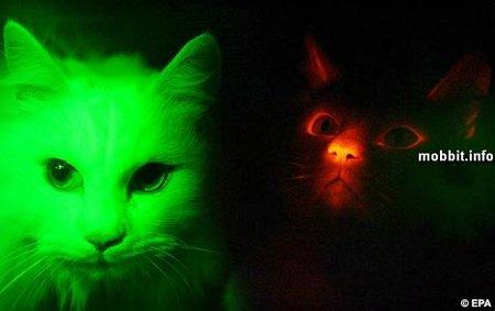 Светящиеся коты. Изображение № 1.