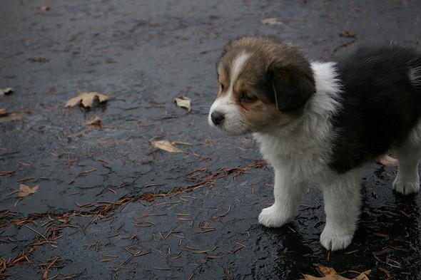 Puppy, puppy, 1-2-3!. Изображение № 8.