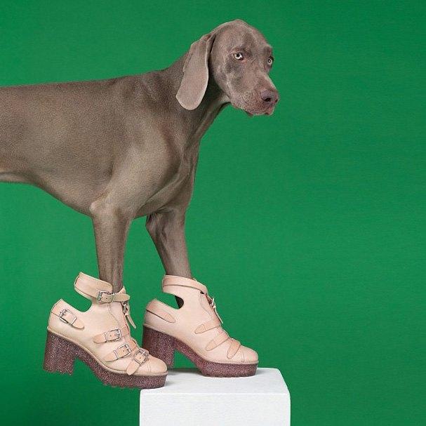 Acne одели собак в свою коллекцию. Изображение № 7.