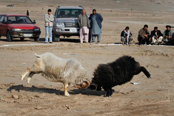 Афганистан. Военная фотография. Изображение № 223.