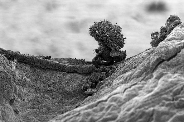 Michael Oliveri. Крошечные пейзажи невидимых миров. Изображение № 2.