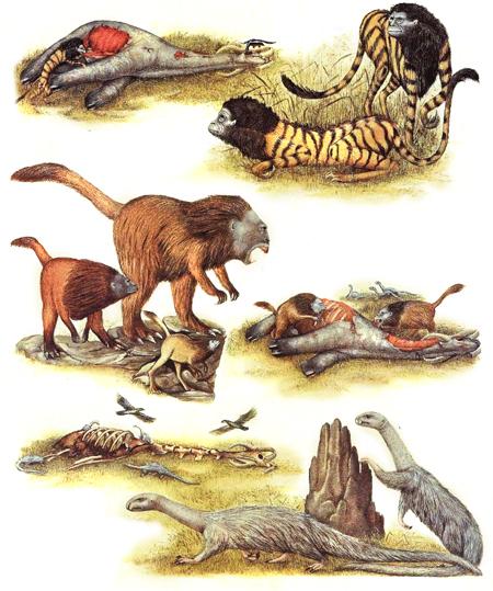Зоология дляпутешественников вовремени. Изображение № 15.