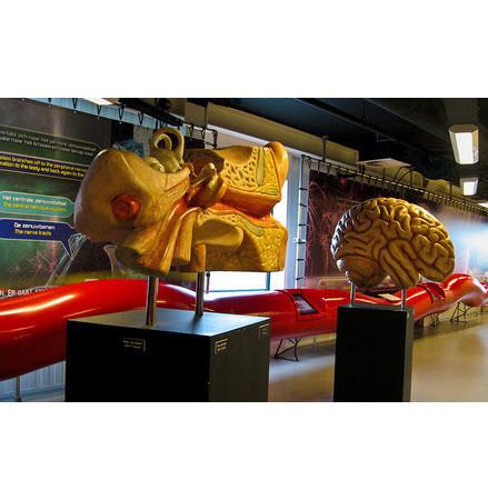 В поисках «Немо»: Гид по мировым музеям науки. Изображение № 137.