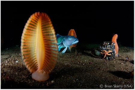 Победители Wildlife Photographer 2008. Изображение № 25.