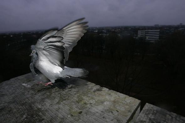 Фотография изсердца Flea. Изображение № 12.