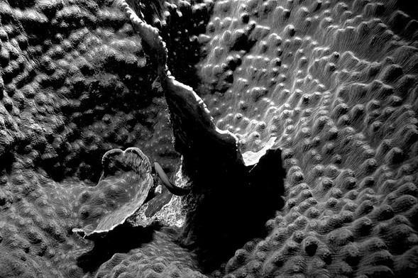 Подводная жизнь глазами фотографа Карлоса Франко. Изображение № 13.