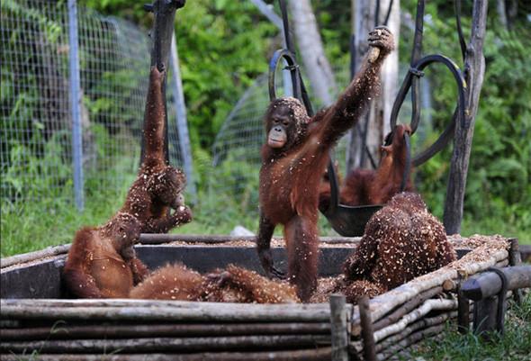 Лоун Дрошер-Нилсен и её обезьянки. Изображение № 3.