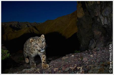 Победители Wildlife Photographer 2008. Изображение № 4.