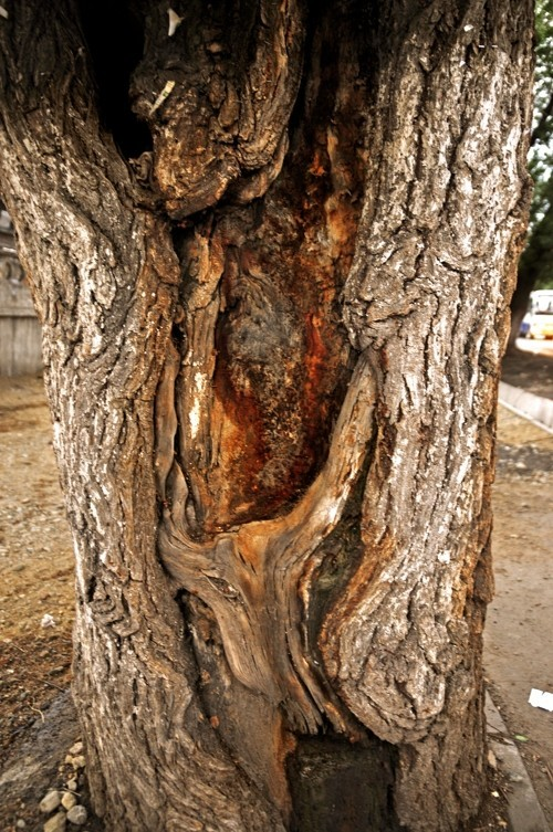 Treefilia. Изображение № 14.