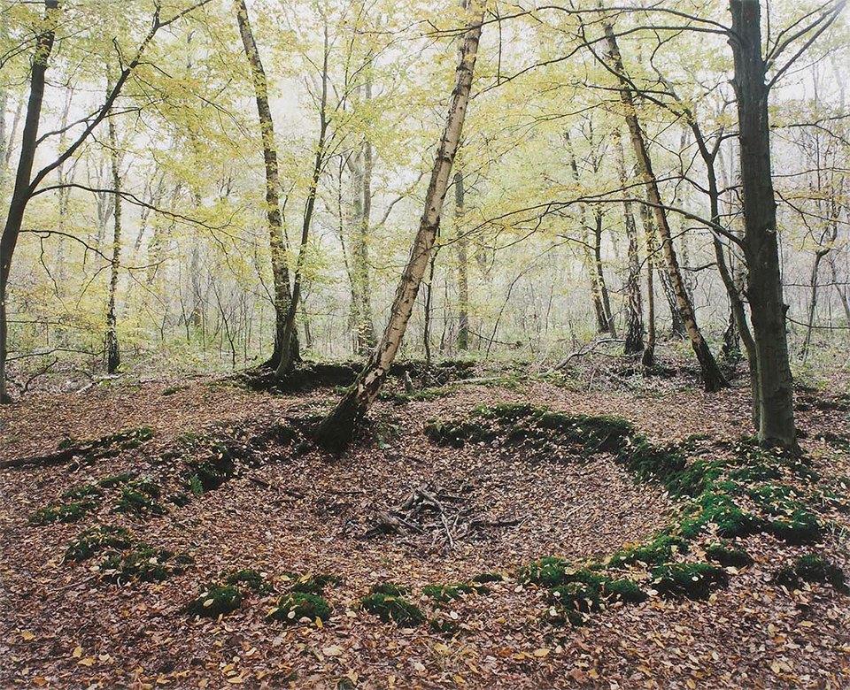 Галерея: как война изменила леса Германии. Изображение № 3.