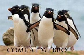В мире животных: Герои «Мадагаскара» в мемах, рекламе и видеороликах. Изображение № 56.