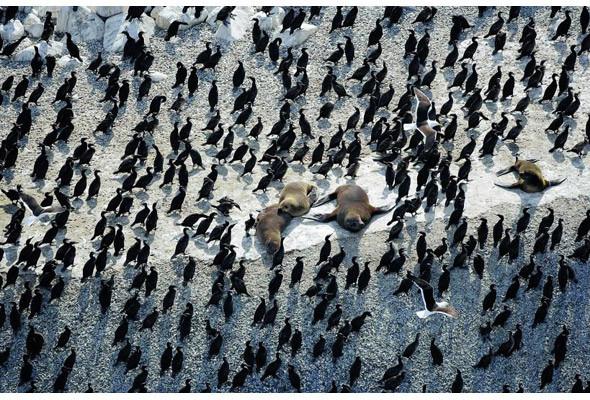 Прямая речь: Фотограф Янн Артюс-Бертран. Изображение № 20.