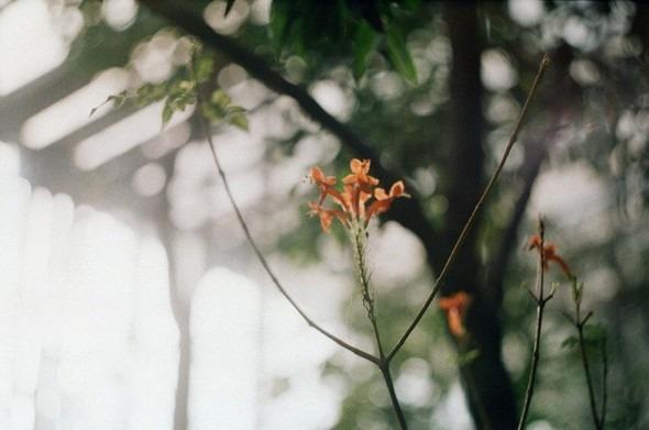 Прогулка по Ботаническому саду. Изображение № 13.