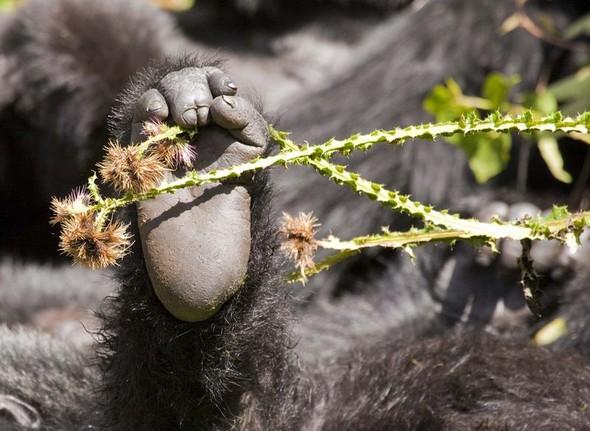 Фотоконкурс National Geographic 2010. Изображение № 27.