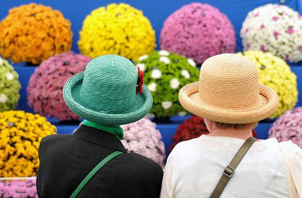 Цветы и шляпки. Изображение № 9.