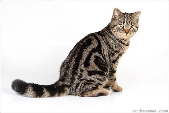 Кошки в интерьере. Изображение № 11.