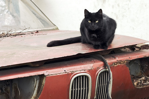 Котики и авто. Изображение № 16.