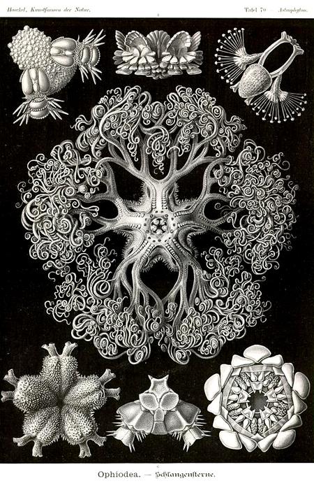 Причудливые формы природы. Изображение № 31.