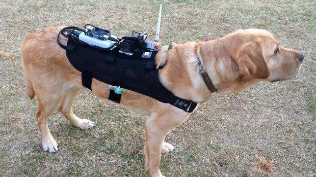 Для поисковых собак будущего создали hi-tech-рюкзак. Изображение № 1.