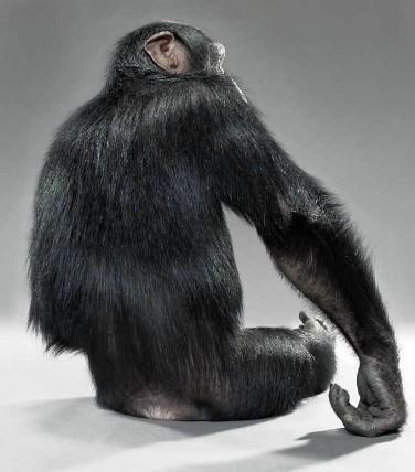 """Jill Greenberg """"Monkey portraits"""". Изображение № 50."""