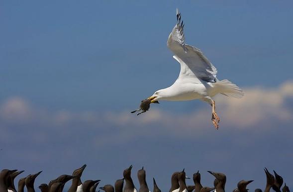 Фотоконкурс National Geographic 2010. Изображение № 43.