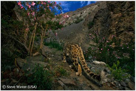 Победители Wildlife Photographer 2008. Изображение № 5.