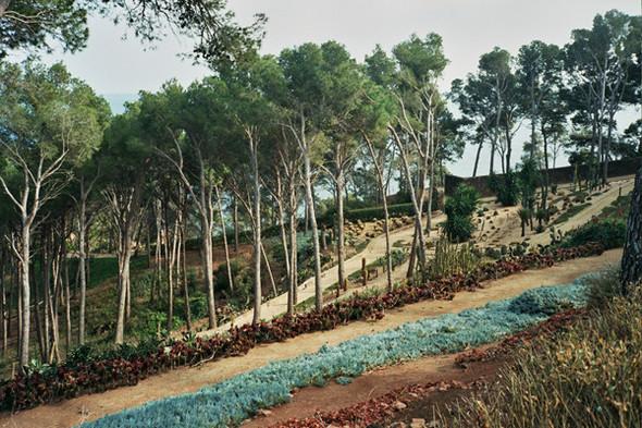 Ботанический сад. Изображение №61.