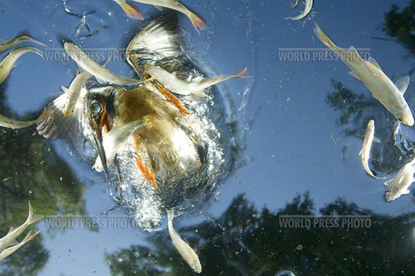 Лауреат World Press Photo 2010. Изображение № 3.