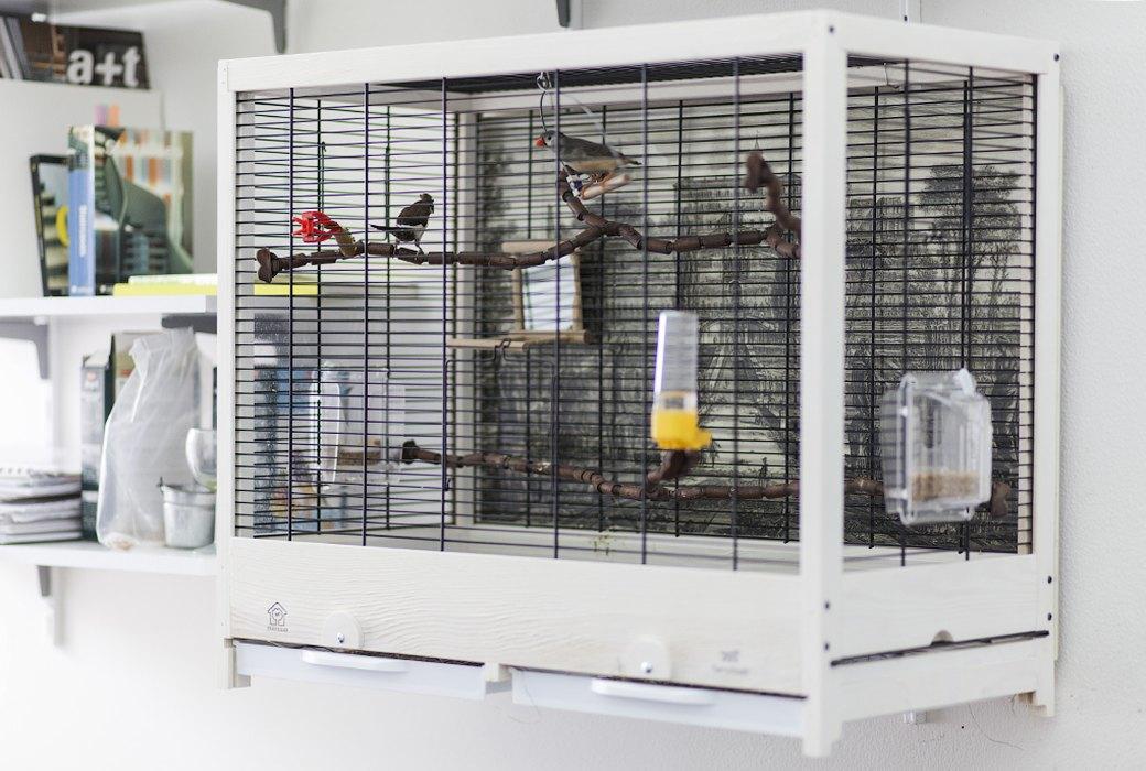 Экзотические птицы и старинные паркеты в архитектурном бюро «Практика». Изображение № 6.