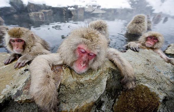 И даже обезьянам нужен отдых. Изображение № 18.